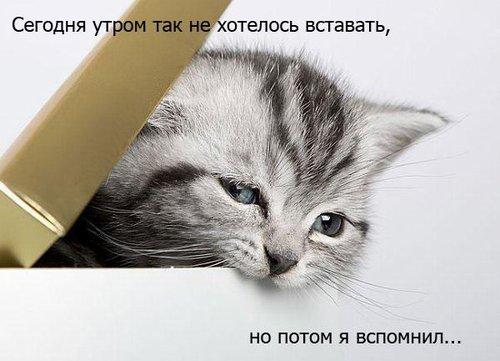 tGkT1oRh0E.jpg